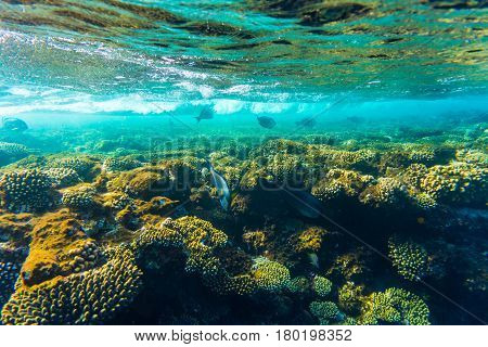 Sea Coral Reef With Hard Corals, Fishes Underwater Photo