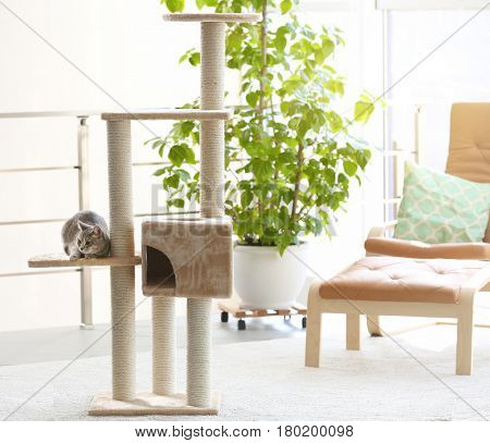 Cute funny cat and tree in room