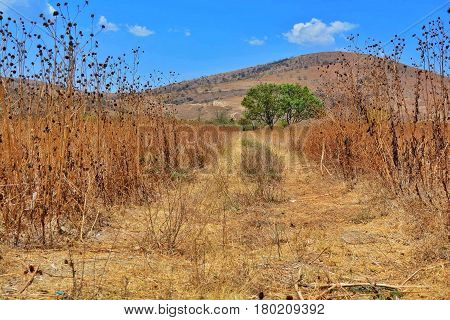 landscape of a path through dry grass reaching green trees