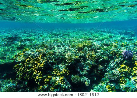 Fishes On The Reaf, Coral Of Red Sea