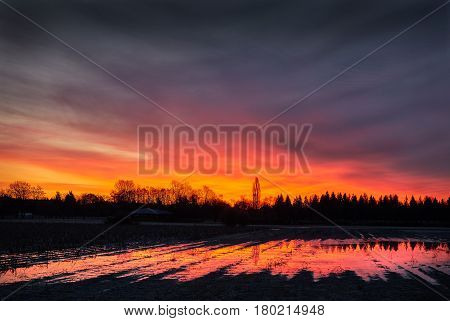 Farmland Sunrise. Sunrise over a flooded farm field.