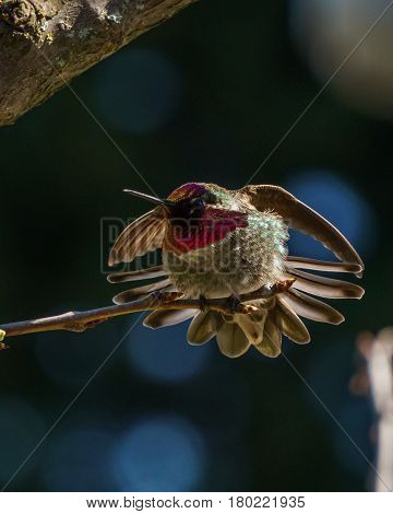 Green Hummingbird Bird On The Branch With Blury Background