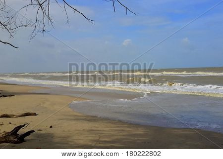 empty beach with tips of tree branches framing the top left corner, many waves breaking, driftwood in left bottom corner, blue sky, sunny