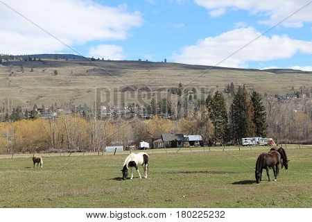 Horses And Pony In Farm Field