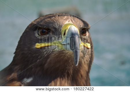 Hawk is similar to the Eagle The birds of prey as well. But the Hawks are smaller. Is there a hooked beak. High and have very good eyesight closeup