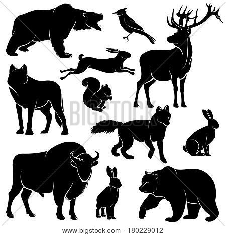 Vector forest animals for wood design. Zoology collection animal wild mammal, illustration of forest animal