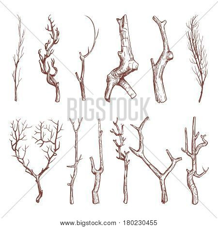 Sketch wood twigs, broken tree branches vector set. Botany wood twig, collection of sketch dry twig limb illustration