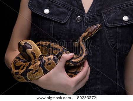 Woman with ball python on black background