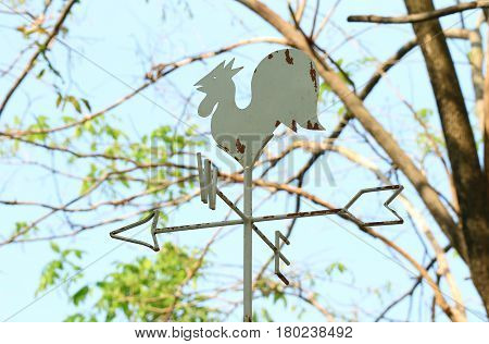Rooster cock shaped weather vane against tree branch and blue sky, Thailand
