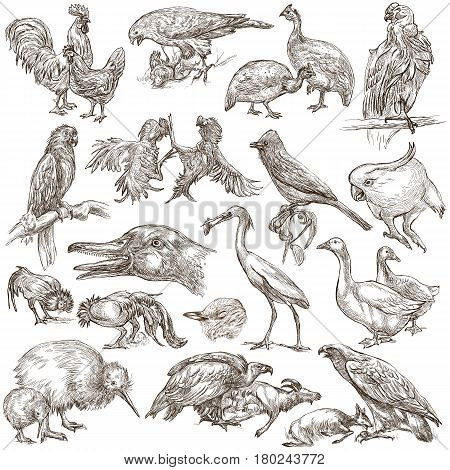 Animals - birds - around the World. Collection of an hand drawn illustrations. Freehand sketches. Line art. Isolated on white.