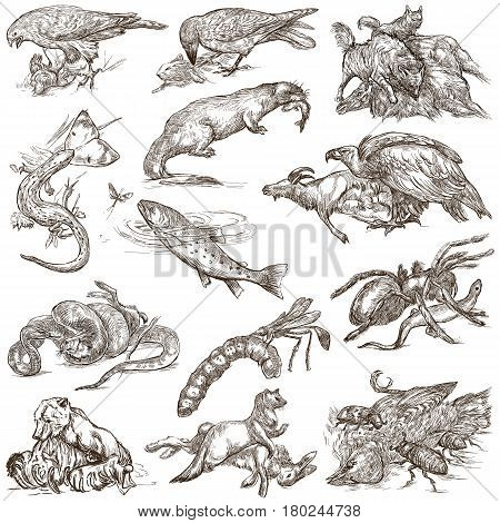 Animals in action around the World - Predators. An hand drawn full sized illustrations. Collection set. Drawing on white isolated line art.