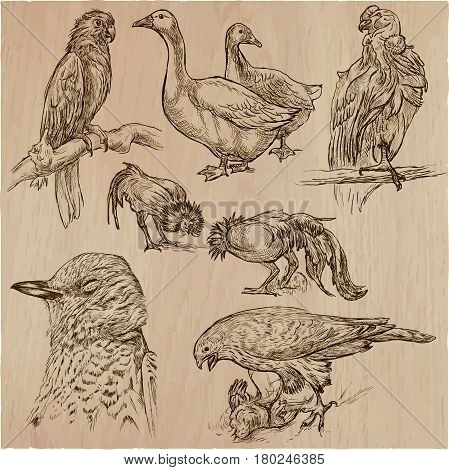 Birds around the World. Collection of an hand drawn vector illustrations. Freehand sketches. Line art. Each drawing comprise of a few layers of lines. Colored background is isolated. Easy editable.