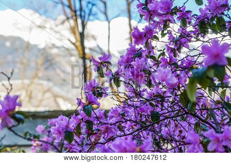 Tree blooming with purple flowers on sunny day