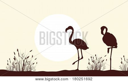 Silhouette of flamingo beauty scenery vector illustration