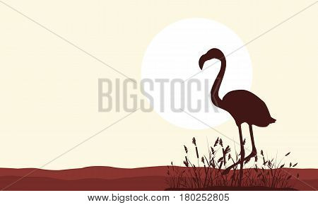 Collection of flamingo scenery silhouette style vector art