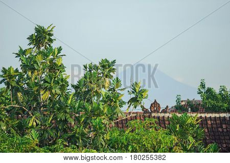 Morning on a tropical island. Fresh tropical greens above the red roof of a village house in Asia. Tropical landscapes - palm trees, blue sky and a volcano in the background.