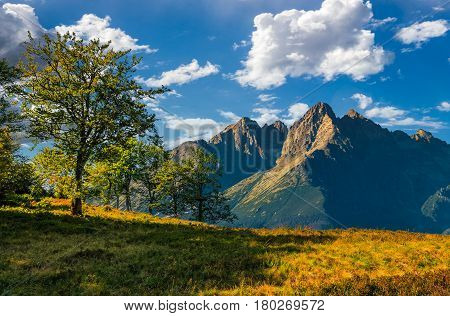 Trees On The Hill In High Tatry Mountain Ridge