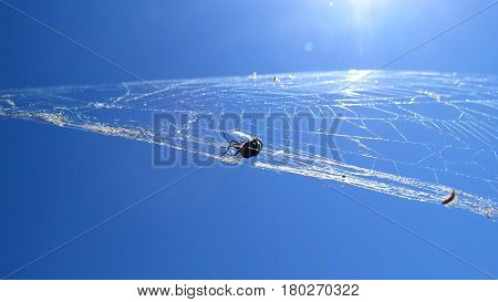 Spider's prey caught in a spider web against a blue summer sunlight sky