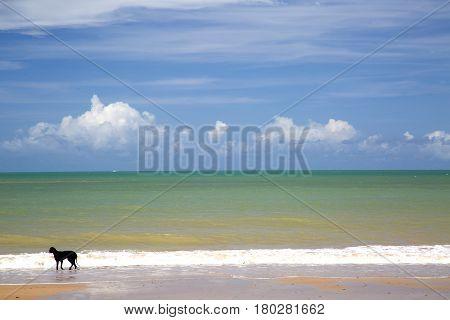 Dog In Brazilian Beach Coast On A Sunny Day In Barra Do Cahy, Bahia, Brazil. February, 2017.