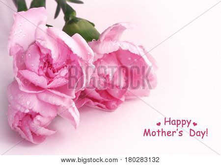 Three pink carnations with water drops bouquet on white background mother's day card