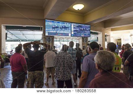 HALLANDALE BEACH USA - MAR 11 2017: People betting on horse races in the Gulfstream park casino in Hallandale Beach. Florida United States