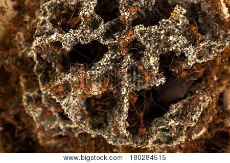 Ants in the underground nest. Nature of ants.