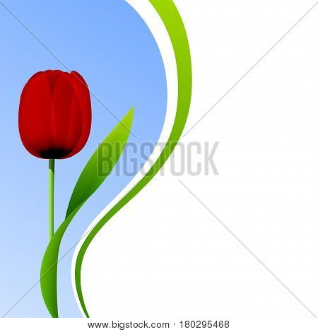 Red tulip flower on blue sky background. Vector card for birthday, easter, mothers day, valentines day, womens day greetings