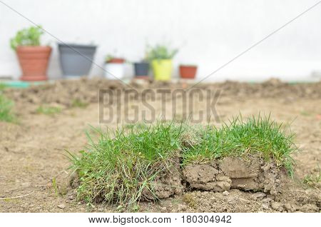 Preparing Lawn In A Backyard