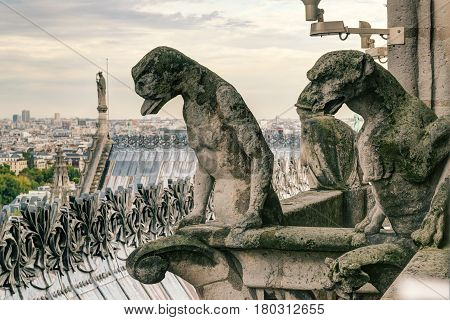 Chimeras (gargoyles) of the Cathedral of Notre Dame de Paris overlooking Paris, France
