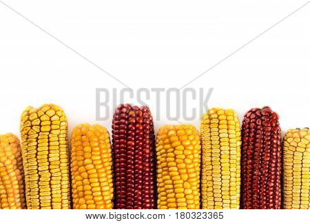 Dried corn cobs isolated on white background