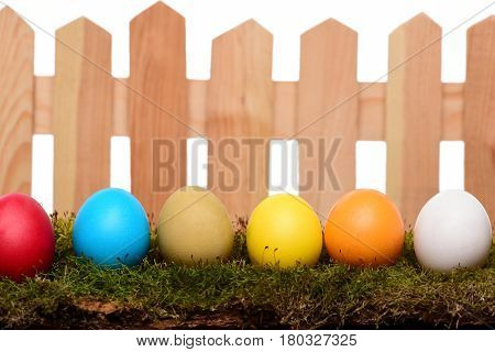 Painted Easter Colorful Eggs On Wooden Fence With Green Moss
