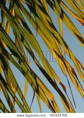 green palm fronds blow against a blue sky