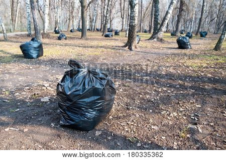 Black plastic garbage bags in the park spring cleaning. Leaves and garbage in the bags.