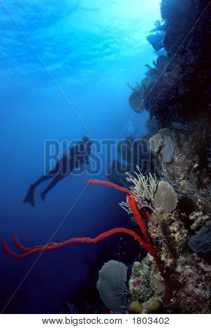 Diver And Red Finger Sponge