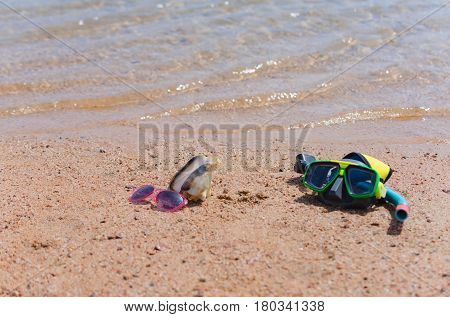 Diving mask with snorkel pink sunglasses and marine shell or seashell natural conch on wet sandy beach at transparent sea water shore on sunny day on beige sand background. Idyllic summer vacation