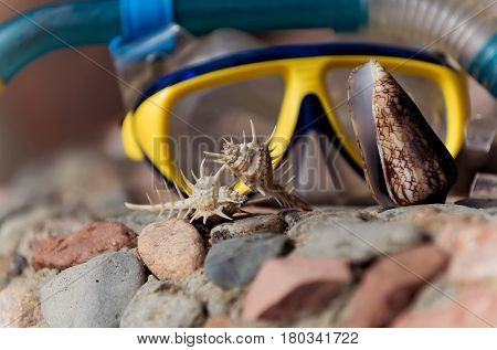 diving treasure. beautiful thorn and cone conchs marine shells or seashells sea snails on stones rocky surface sunny day on blurred blue and yellow mask background. Idyllic summer vacation