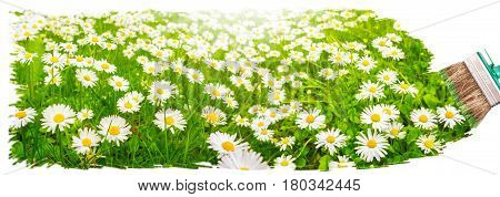 a brush paints a lush meadow with Daisy