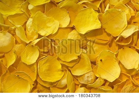 Background of dried yellow rose petals on white background. Texture of yellow dried rose petals.