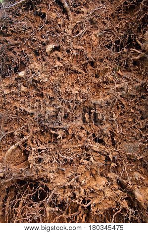Close up of soil with roots for planted used as background
