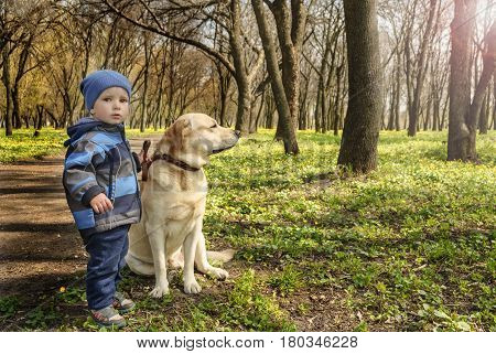 Little boy and a dog are walking in the spring park