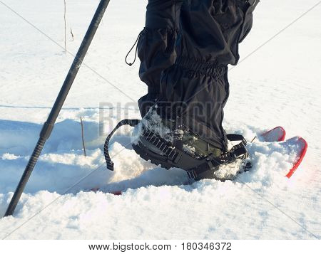 Man Legs With Snowshoes Walk In Snow. Detail Of Winter Hike In Snowdrift, Snowshoeing