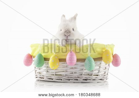 Easter Bunny sitting in a wicker basket decorated with Easter eggs