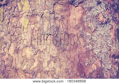 Plane Tree Bark Natural Abstract Background