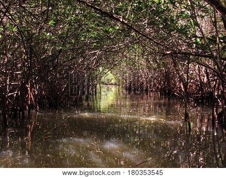 Light at the end of the Mangrove tunnel in Thousand Islands Park near Cocoa Beach, Florida