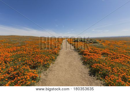 Dirt path at the Antelope Valley California Poppy Reserve State Park.