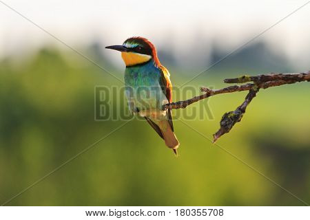 wonderful colored bird sitting on a dry branch and beautiful light, wildlife birds
