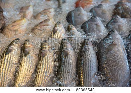 Fresh Raw Sea Fishes At Seafood And Fish Market