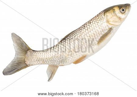 fish on a white background . A photo
