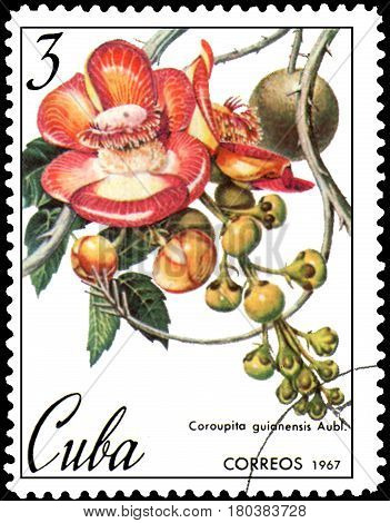 CUBA - CIRCA 1967: postage stamp, printed in Cuba, shows image of Couroupita guianensis
