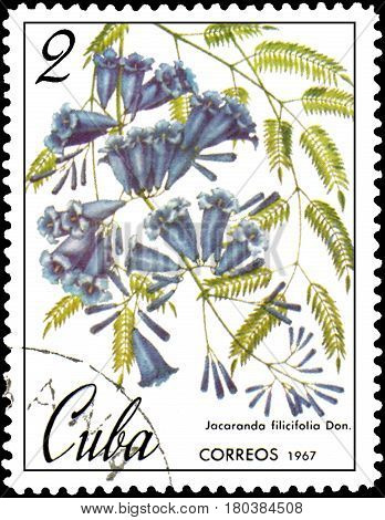 CUBA - CIRCA 1967: postage stamp, printed in Cuba, shows image of Jacaranda filicifolia